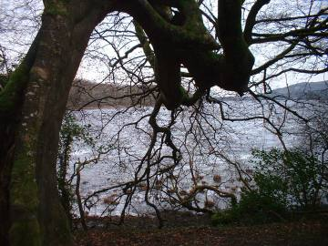 Hazelwood walk in Winter 1